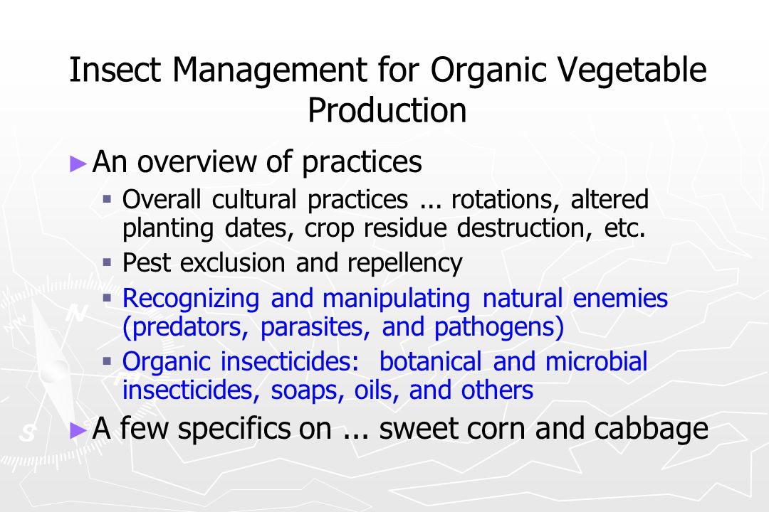 Insect Management for Organic Vegetable Production ► ► An overview of practices   Overall cultural practices... rotations, altered planting dates, c