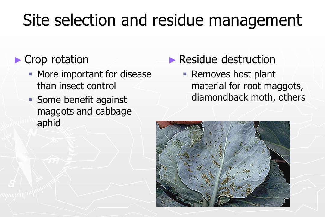Site selection and residue management ► ► Crop rotation   More important for disease than insect control   Some benefit against maggots and cabbag