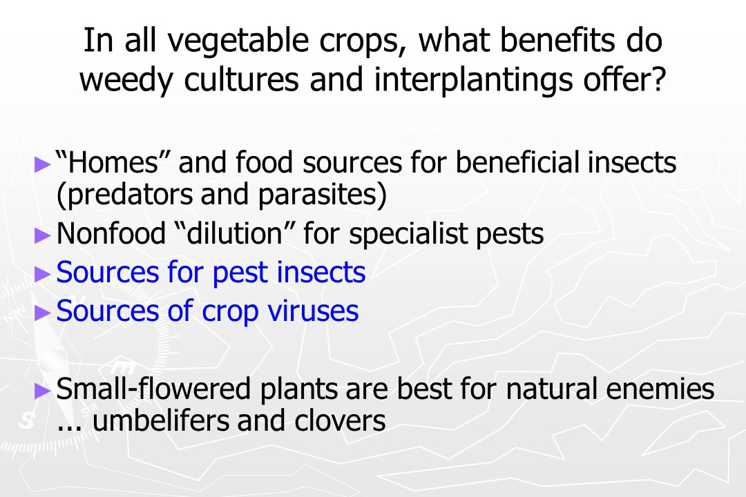 """In all vegetable crops, what benefits do weedy cultures and interplantings offer? ► ► """"Homes"""" and food sources for beneficial insects (predators and p"""