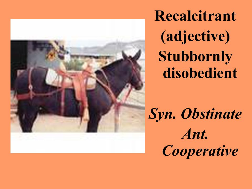 Recalcitrant (adjective) Stubbornly disobedient Syn. Obstinate Ant. Cooperative