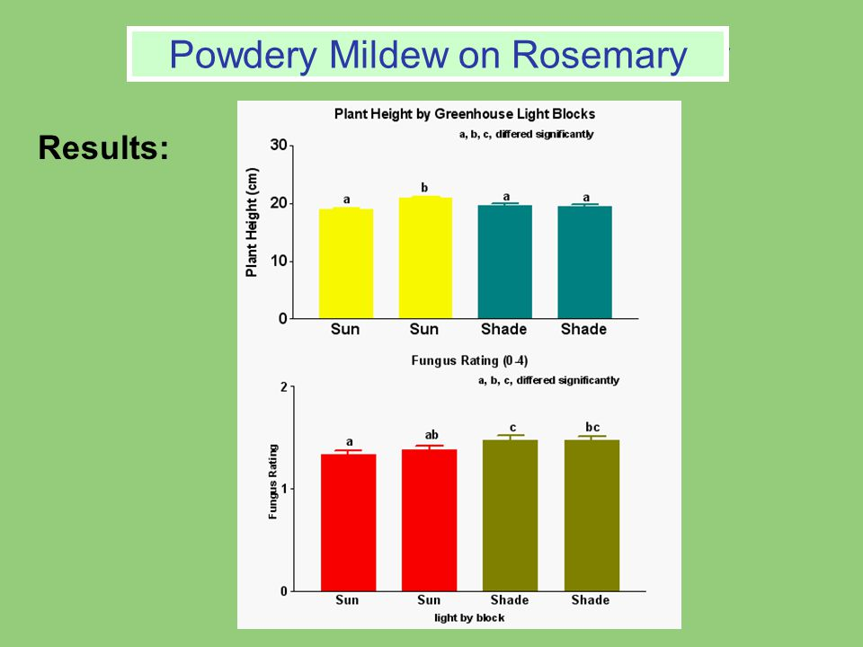 Powdery Mildew on Rosemary Results: Powdery Mildew on Rosemary