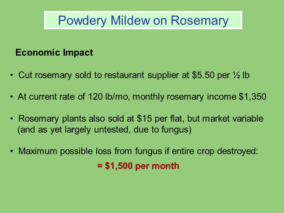 Powdery Mildew on Rosemary Economic Impact Cut rosemary sold to restaurant supplier at $5.50 per ½ lb At current rate of 120 lb/mo, monthly rosemary income $1,350 Rosemary plants also sold at $15 per flat, but market variable (and as yet largely untested, due to fungus) Maximum possible loss from fungus if entire crop destroyed: = $1,500 per month