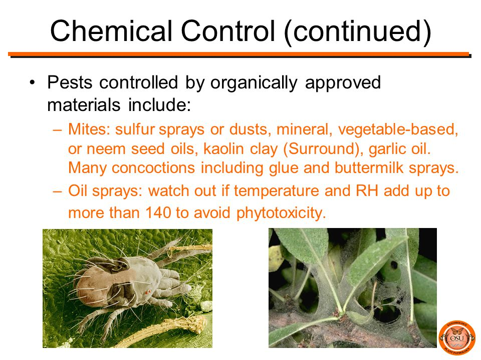 Chemical Control (continued) Pests controlled by organically approved materials include: –Mites: sulfur sprays or dusts, mineral, vegetable-based, or neem seed oils, kaolin clay (Surround), garlic oil.