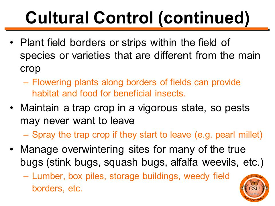 Cultural Control (continued) Plant field borders or strips within the field of species or varieties that are different from the main crop –Flowering plants along borders of fields can provide habitat and food for beneficial insects.