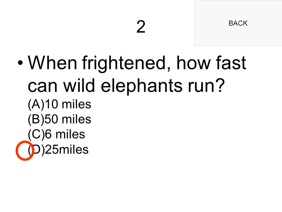 BACK 2 When frightened, how fast can wild elephants run.