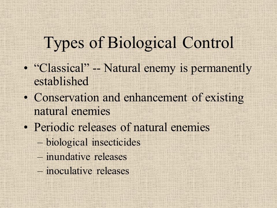 Types of Biological Control Classical -- Natural enemy is permanently established Conservation and enhancement of existing natural enemies Periodic releases of natural enemies –biological insecticides –inundative releases –inoculative releases