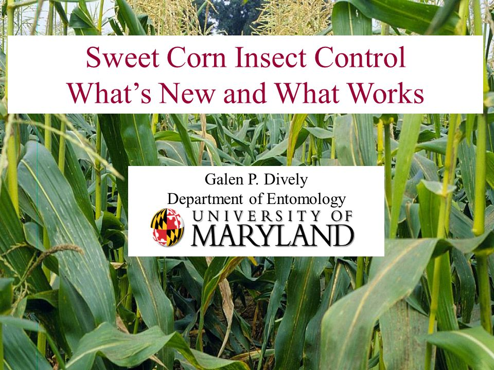 Sweet Corn Insect Control What's New and What Works Galen P. Dively Department of Entomology