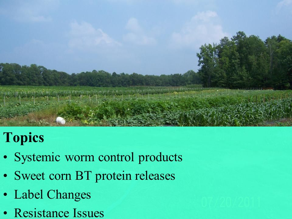 Bt Sweet Corn is an Environmentally Safe Control Option  Ideally fits the IPM philosophy by combining: - Host plant resistance - Different modes of action to prevent resistance.
