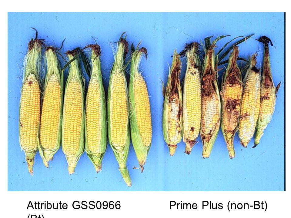 Attribute GSS0966 (Bt) Prime Plus (non-Bt)