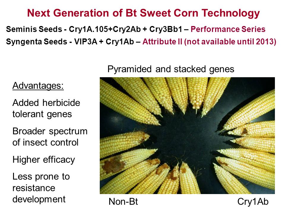 Cry1AbNon-Bt Next Generation of Bt Sweet Corn Technology Advantages: Added herbicide tolerant genes Broader spectrum of insect control Higher efficacy