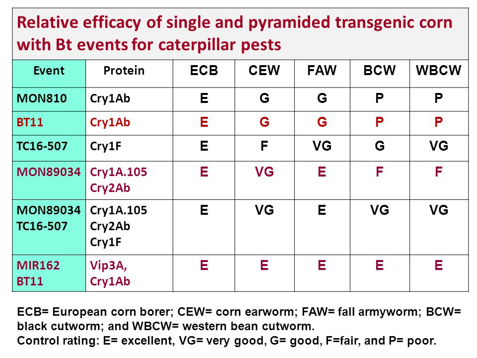 Relative efficacy of single and pyramided transgenic corn with Bt events for caterpillar pests EventProtein ECBCEWFAWBCWWBCW MON810Cry1Ab EGGPP BT11Cr