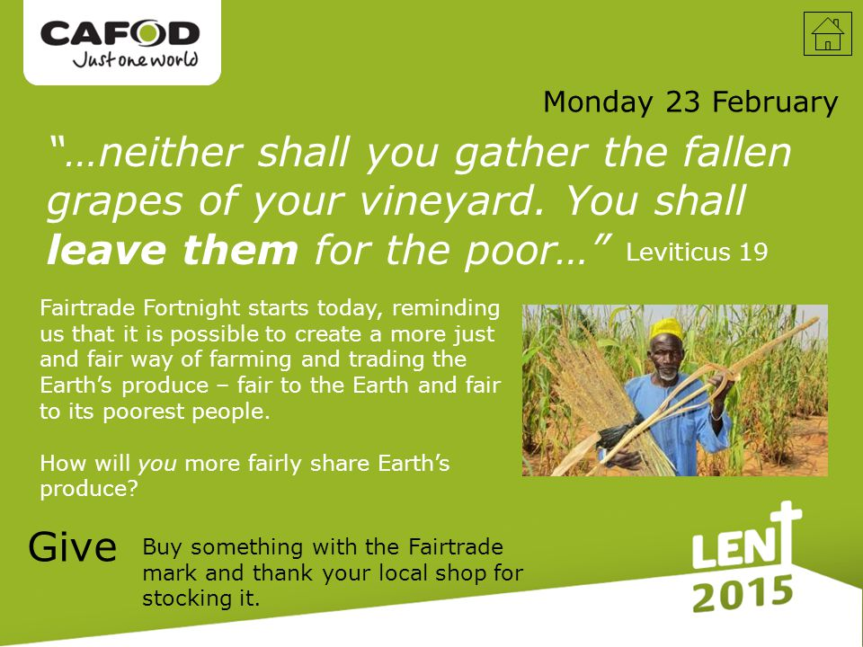 …neither shall you gather the fallen grapes of your vineyard.