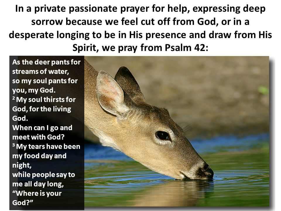 In a private passionate prayer for help, expressing deep sorrow because we feel cut off from God, or in a desperate longing to be in His presence and draw from His Spirit, we pray from Psalm 42: As the deer pants for streams of water, so my soul pants for you, my God.