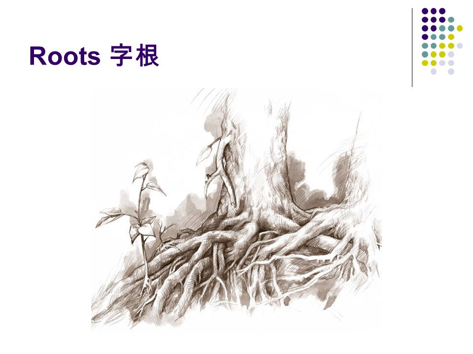 Roots 字根