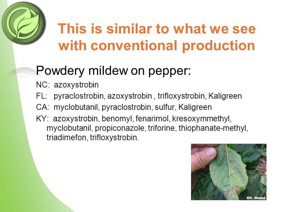 This is similar to what we see with conventional production Powdery mildew on pepper: NC: azoxystrobin FL: pyraclostrobin, azoxystrobin, trifloxystrobin, Kaligreen CA: myclobutanil, pyraclostrobin, sulfur, Kaligreen KY: azoxystrobin, benomyl, fenarimol, kresoxymmethyl, myclobutanil, propiconazole, triforine, thiophanate-methyl, triadimefon, trifloxystrobin.
