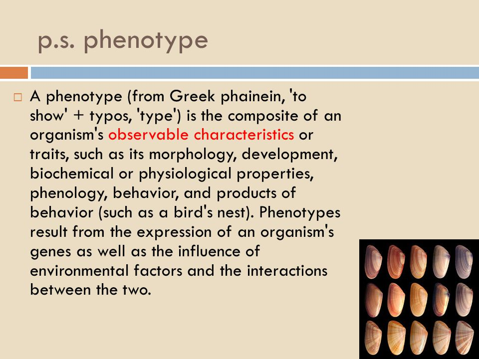 p.s. phenotype  A phenotype (from Greek phainein, 'to show' + typos, 'type') is the composite of an organism's observable characteristics or traits,