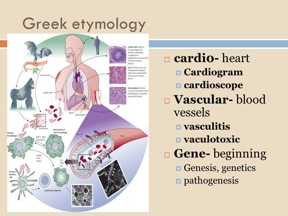 Greek etymology  cardi0- heart  Cardiogram  cardioscope  Vascular- blood vessels  vasculitis  vaculotoxic  Gene- beginning  Genesis, genetics