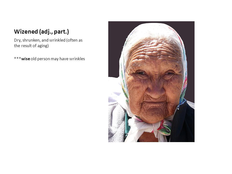 Wizened (adj., part.) Dry, shrunken, and wrinkled (often as the result of aging) ***wise old person may have wrinkles