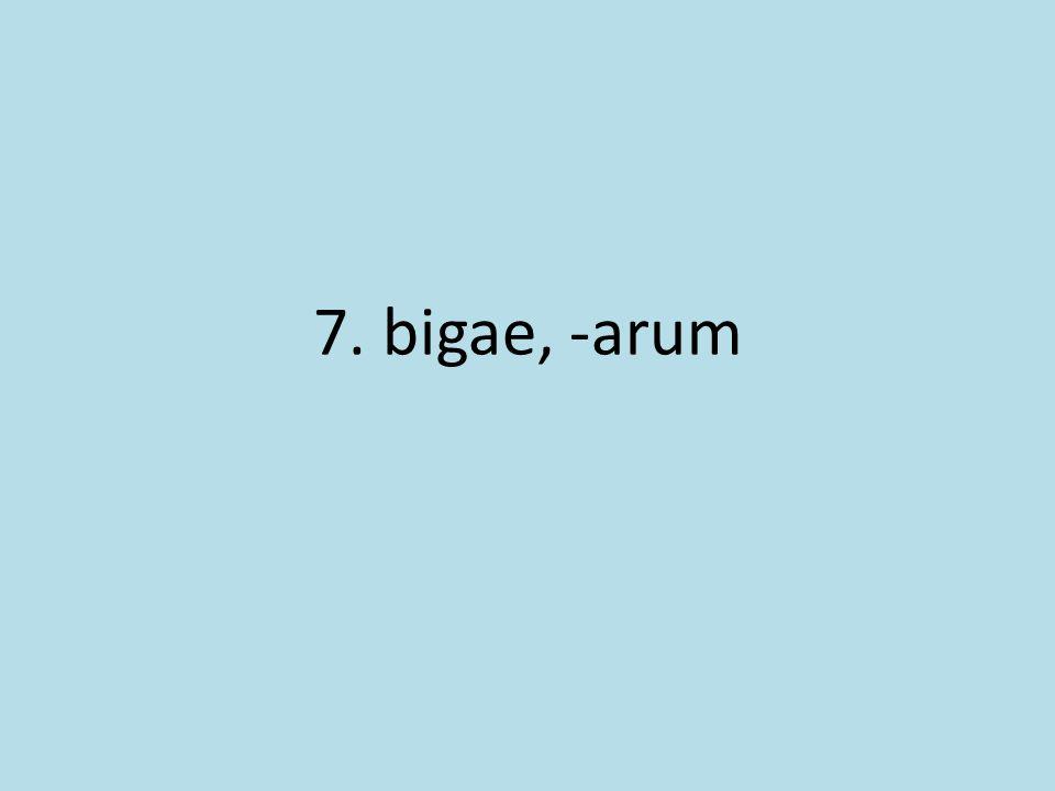 7. bigae, -arum