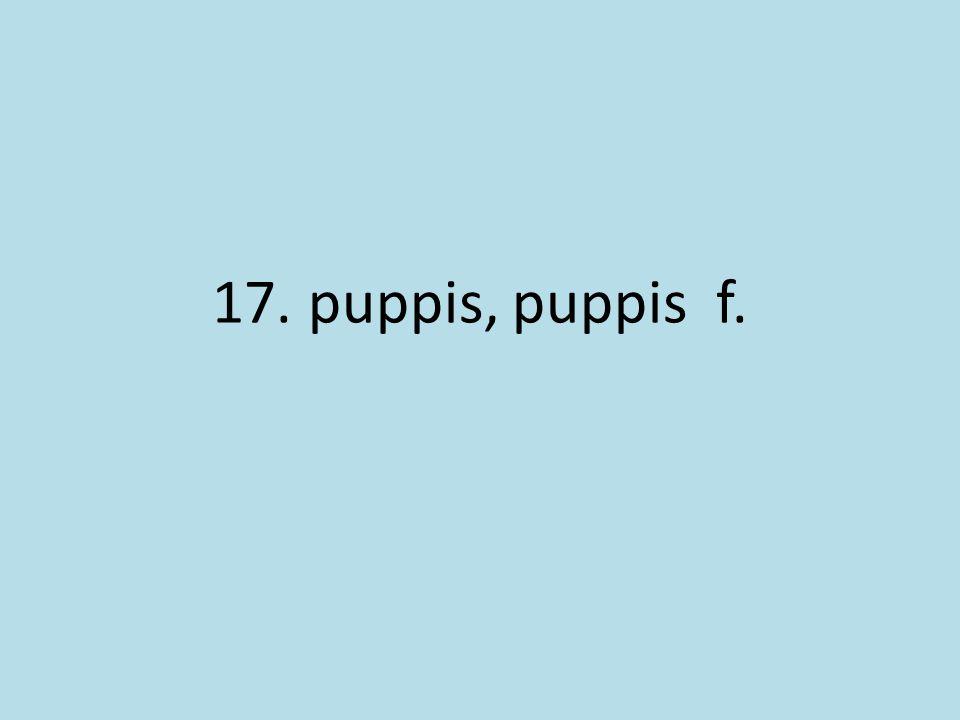 17. puppis, puppis f.