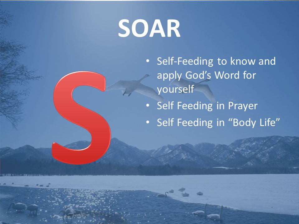 SOAR Self-Feeding to know and apply God's Word for yourself Self Feeding in Prayer Self Feeding in Body Life