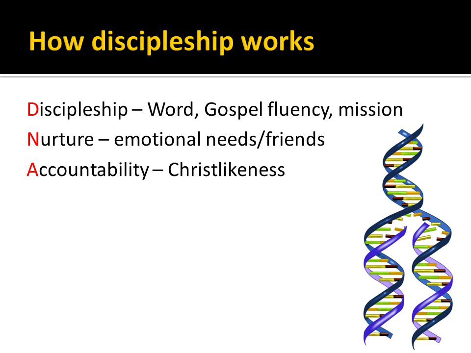 Discipleship – Word, Gospel fluency, mission Nurture – emotional needs/friends Accountability – Christlikeness