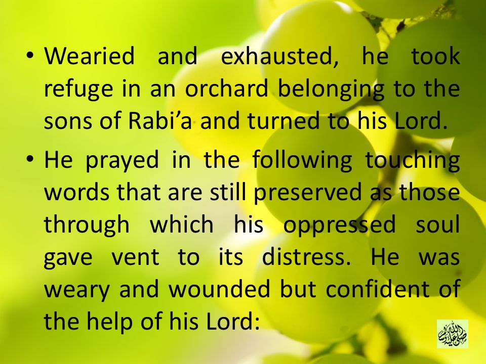 Wearied and exhausted, he took refuge in an orchard belonging to the sons of Rabi'a and turned to his Lord.