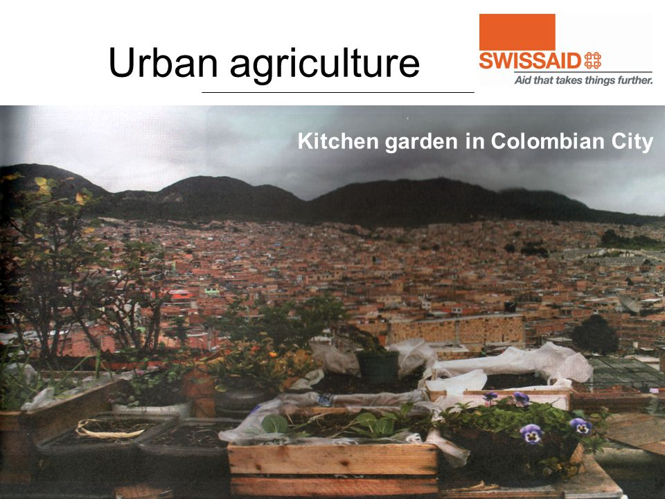 Urban agriculture Kitchen garden in Colombian City