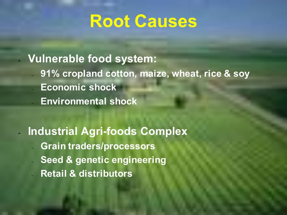 Root Causes  Vulnerable food system:  91% cropland cotton, maize, wheat, rice & soy  Economic shock  Environmental shock  Industrial Agri-foods Complex  Grain traders/processors  Seed & genetic engineering  Retail & distributors