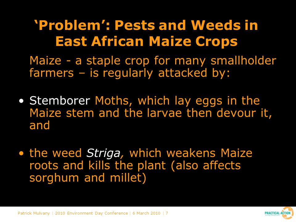 Patrick Mulvany | 2010 Environment Day Conference | 6 March 2010 | 7 'Problem': Pests and Weeds in East African Maize Crops Maize - a staple crop for many smallholder farmers – is regularly attacked by: Stemborer Moths, which lay eggs in the Maize stem and the larvae then devour it, and the weed Striga, which weakens Maize roots and kills the plant (also affects sorghum and millet)