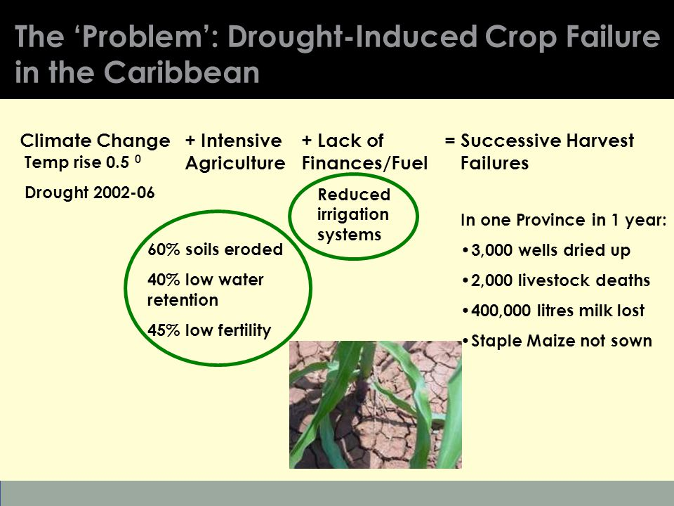 Patrick Mulvany | 2010 Environment Day Conference | 6 March 2010 | 9 The 'Problem': Drought-Induced Crop Failure in the Caribbean = Successive Harvest Failures Climate Change+ Intensive Agriculture Temp rise 0.5 0 Drought 2002-06 + Lack of Finances/Fuel 60% soils eroded 40% low water retention 45% low fertility Reduced irrigation systems In one Province in 1 year: 3,000 wells dried up 2,000 livestock deaths 400,000 litres milk lost Staple Maize not sown