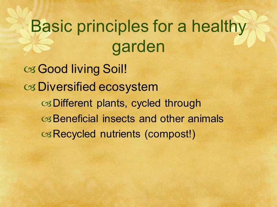 Basic principles for a healthy garden  Good living Soil.