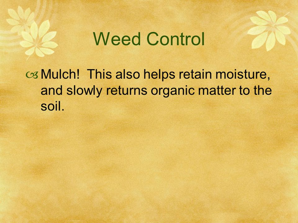 Weed Control  Mulch.