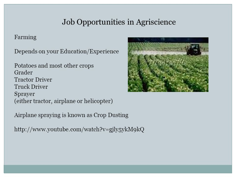 Job Opportunities in Agriscience Farming Depends on your Education/Experience Potatoes and most other crops Grader Tractor Driver Truck Driver Sprayer (either tractor, airplane or helicopter) Airplane spraying is known as Crop Dusting http://www.youtube.com/watch v=gjly5ykM9kQ