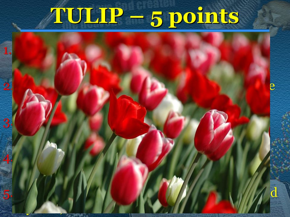 TULIP – 5 points 1.Total 1.Total Depravity - Original sin means all human beings are incapable of being good. 2.Unconditional 2.Unconditional Election