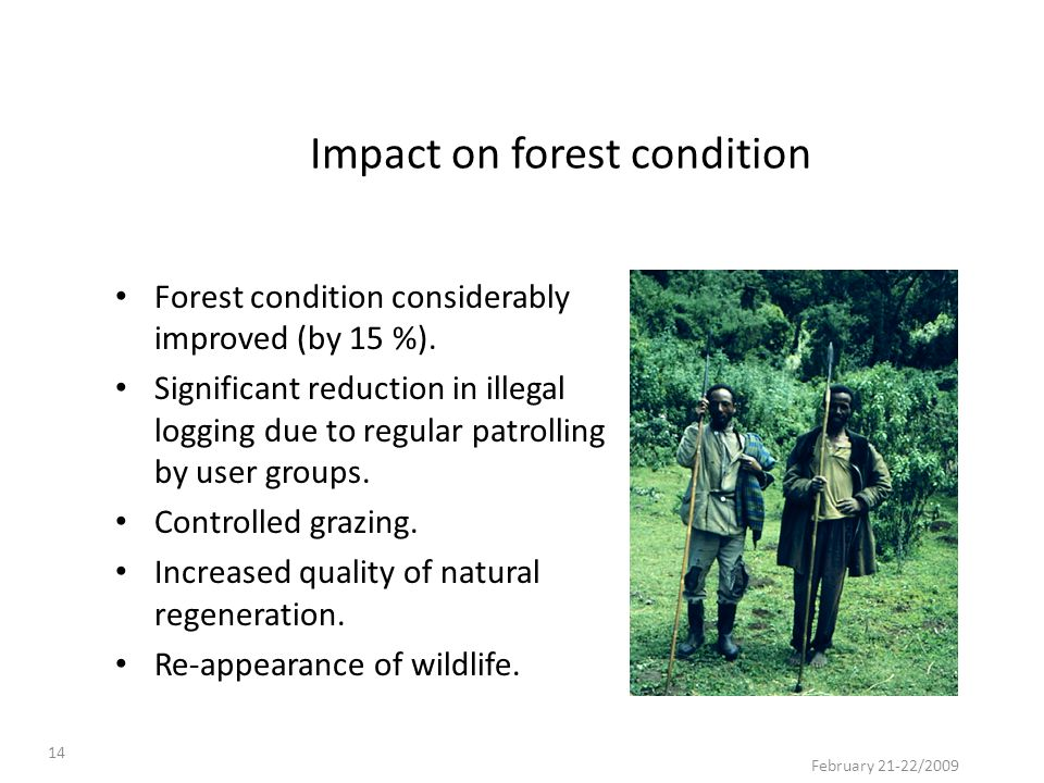 February 21-22/2009 14 Impact on forest condition Forest condition considerably improved (by 15 %). Significant reduction in illegal logging due to re