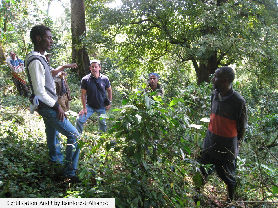 Certification Audit by Rainforest Alliance