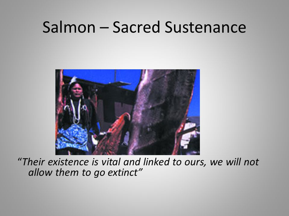 Salmon – Sacred Sustenance Their existence is vital and linked to ours, we will not allow them to go extinct