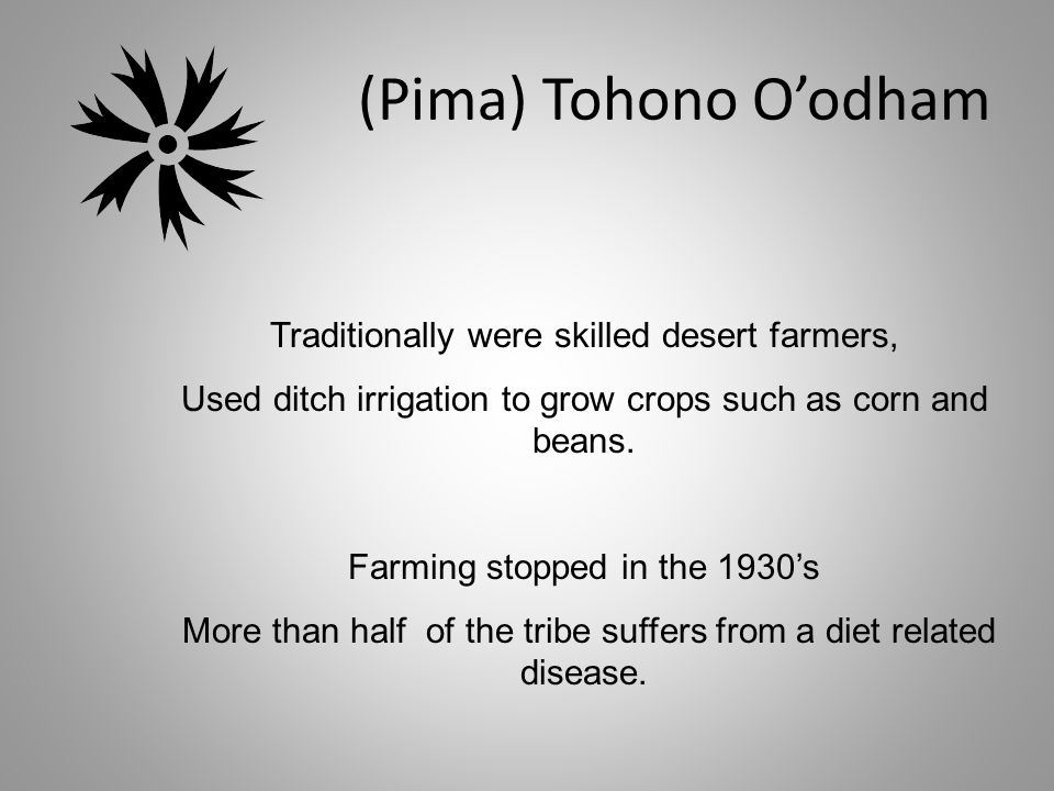 (Pima) Tohono O'odham Traditionally were skilled desert farmers, Used ditch irrigation to grow crops such as corn and beans.