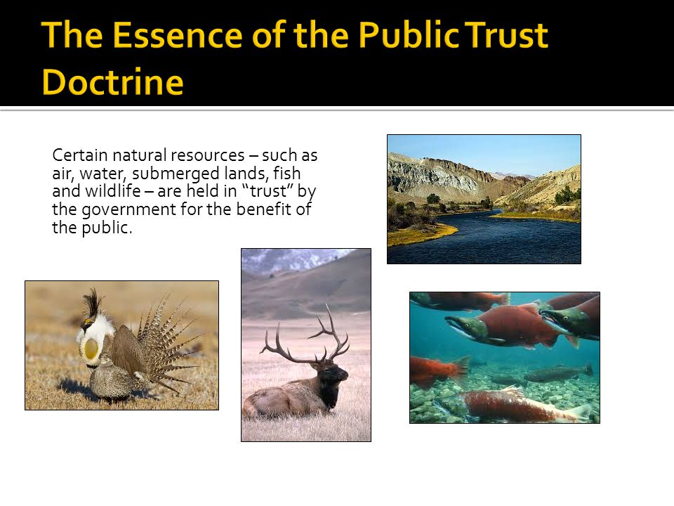 Certain natural resources – such as air, water, submerged lands, fish and wildlife – are held in trust by the government for the benefit of the public.
