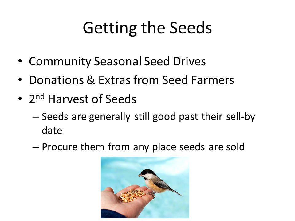 Getting the Seeds Community Seasonal Seed Drives Donations & Extras from Seed Farmers 2 nd Harvest of Seeds – Seeds are generally still good past their sell-by date – Procure them from any place seeds are sold
