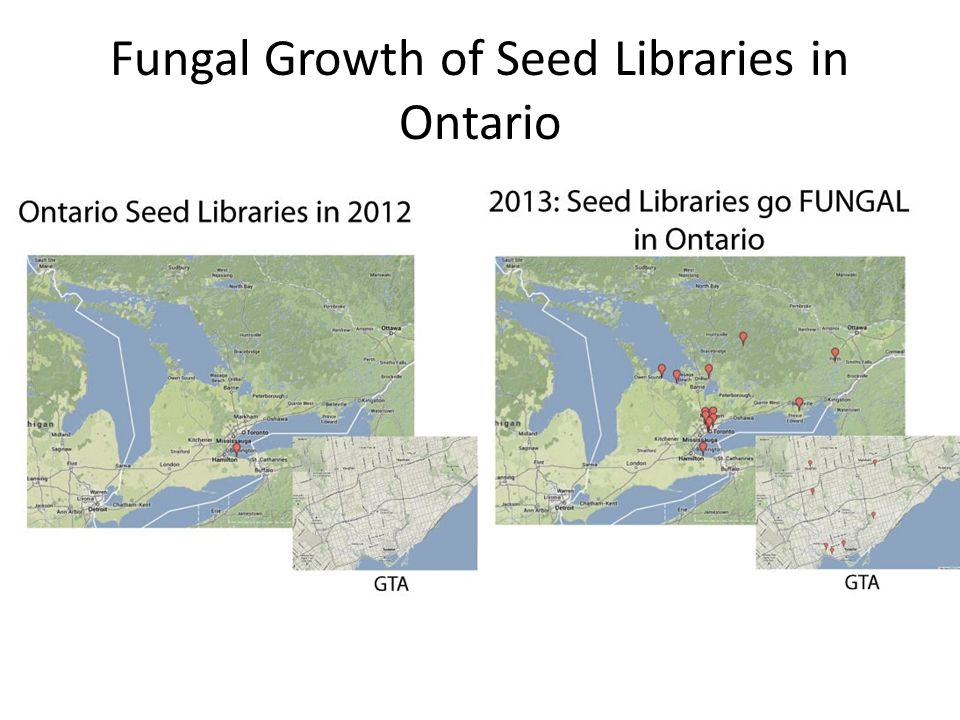 Fungal Growth of Seed Libraries in Ontario