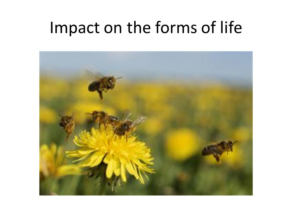 Impact on the forms of life