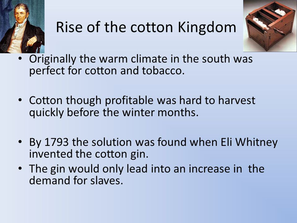 Rise of the cotton Kingdom Originally the warm climate in the south was perfect for cotton and tobacco.