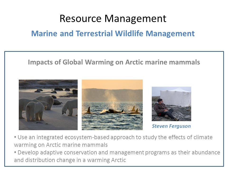 Impacts of Global Warming on Arctic marine mammals Resource Management Marine and Terrestrial Wildlife Management Steven Ferguson Use an integrated ecosystem-based approach to study the effects of climate warming on Arctic marine mammals Develop adaptive conservation and management programs as their abundance and distribution change in a warming Arctic
