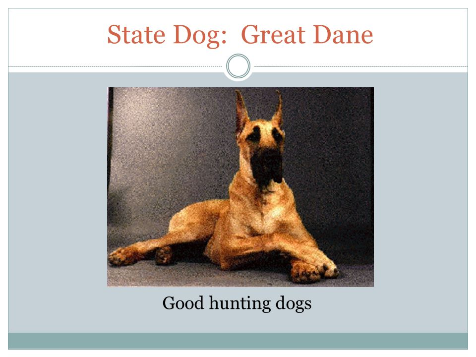 State Dog: Great Dane Good hunting dogs