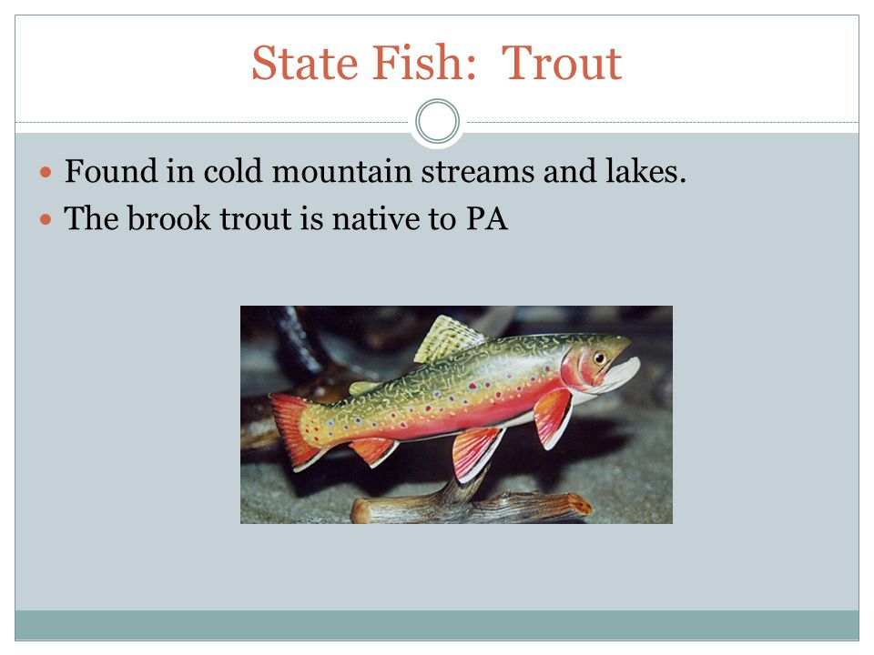 State Fish: Trout Found in cold mountain streams and lakes. The brook trout is native to PA
