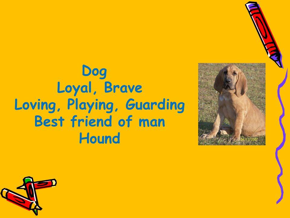 Dog Loyal, Brave Loving, Playing, Guarding Best friend of man Hound