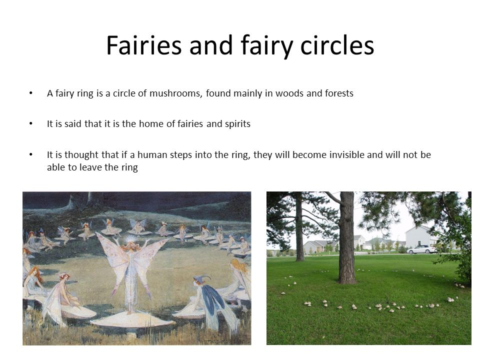 Fairies and fairy circles A fairy ring is a circle of mushrooms, found mainly in woods and forests It is said that it is the home of fairies and spirits It is thought that if a human steps into the ring, they will become invisible and will not be able to leave the ring