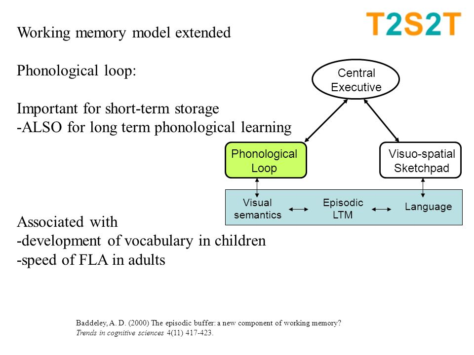Working memory model extended Phonological loop: Important for short-term storage -ALSO for long term phonological learning Associated with -development of vocabulary in children -speed of FLA in adults Central Executive Phonological Loop Visuo-spatial Sketchpad Visual semantics Episodic LTM Language Baddeley, A.